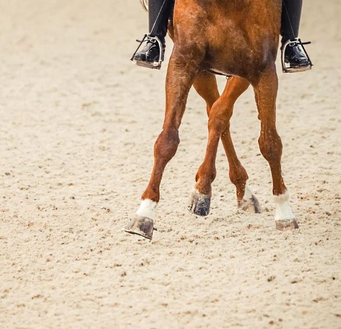 Jak dbać oszczotki na pęcinach koni?