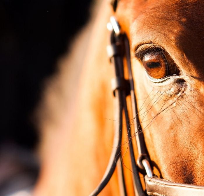 Zmysł wzroku konia. Jak konie widzą?