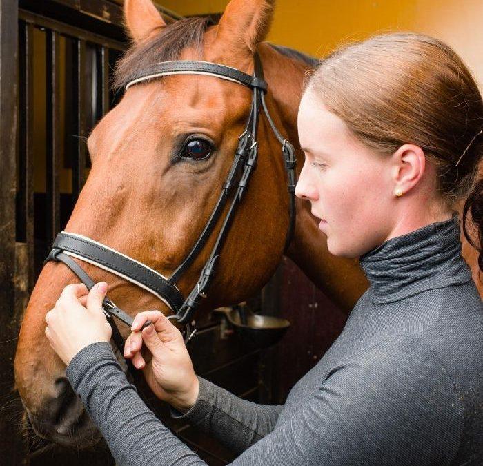 Fizjoterapia i masaż dla konia. Jakie zabiegi wykonujemy podczas rehabilitacji konia.