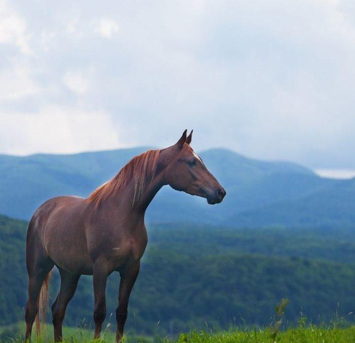 Koszty dla posiadaczy konia