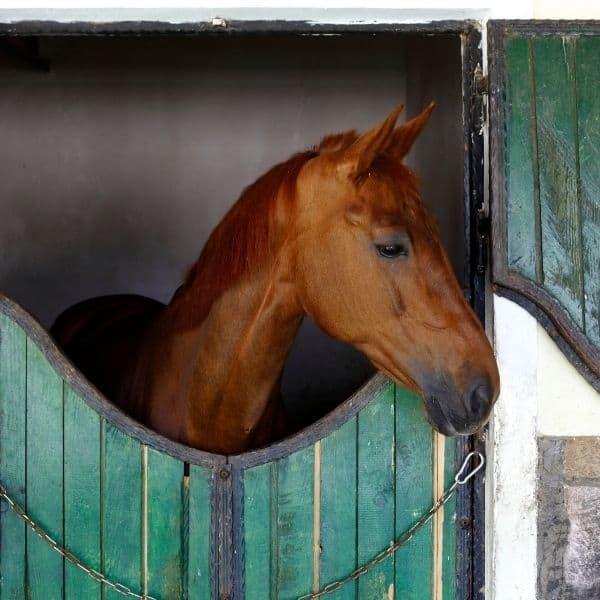 Opoje u koni – diagnostyka, objawy i leczenie