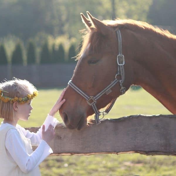 Zapoprężenie u koni. Diagnostyka, objawy, leczenie.
