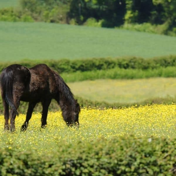 Borelioza koni – czym jest i jakie są jej objawy?