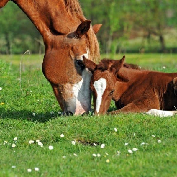 Herpeswirus u koni jako choroba układu oddechowego