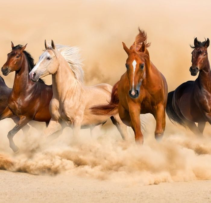 Kilka ciekawostek dotyczących pochodzenia, życia i cech charakterystycznych koni.