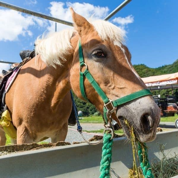 Żywienie koni – podstawowe zasady