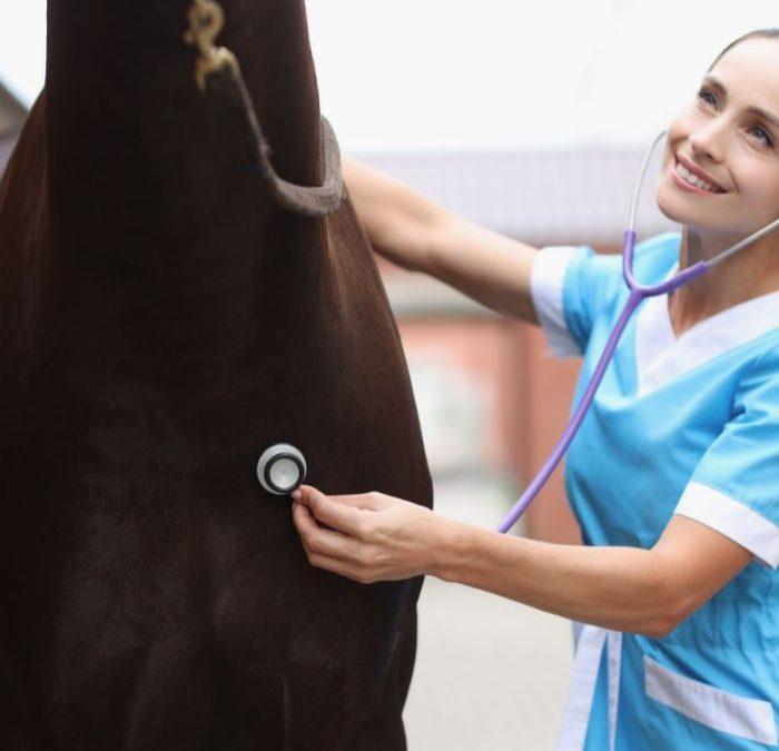 Czym jest endoskopia wysiłkowa u koni?